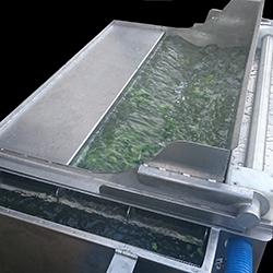 Lavadora de Verduras Industrial - 2